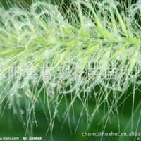 苗圃直销,水生植物,水生花卉,芦苇,原始风景