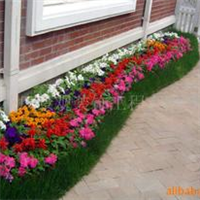 供应各种四季花草植物
