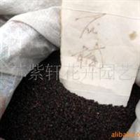 供应海桐种子、香椿种子、石楠种子、白果种子(图)