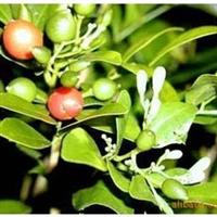 批发花卉种子:九里香种子,牡丹种子,芍药种子,月季种子等
