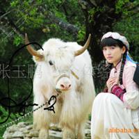 旅游白牦牛影视专用白牦牛