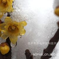 腊梅中较名贵的品种--素心腊梅苗