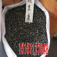 厂家直销沭阳春梅种业优质北京栾树种子100%发芽率