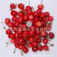 樱桃产地直接批发圆通航空空运3日内到货新鲜时令水果