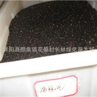供应:优质鸡冠花种子鸡冠花种子价格优惠附鸡冠花种子种植技术