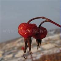 供应中药材刺莓果
