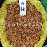 直销优质果树种子—山楂种子别名红果、棠棣、绿梨