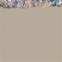 供应丛生腊梅、安徽腊梅价格、腊梅小苗、丛生腊梅供应商