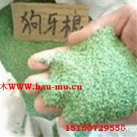 狗牙根草坪种子 红三叶种子 白三叶种子 马蹄金种子40元