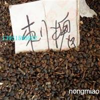 刺槐种子价格国槐紫穗槐种子价格行情臭椿苦楝白蜡种子价格便宜