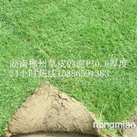 【供应武汉草坪,黄石草皮,咸宁马尼拉草皮价格】
