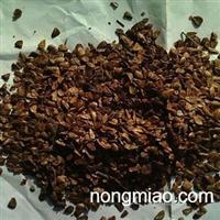 香椿种子价格,香椿种子批发