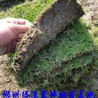 哪里有【绿化草坪草皮】