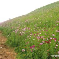 汕头花种佛山花种韶关花种湛江各类花种系列