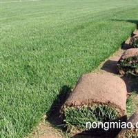 哈尔滨绿化工程施工哈尔滨草坪基地哈尔滨园林绿化公司庆全苗圃