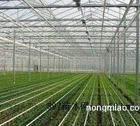 北方园艺温室日光温室大棚建设代理?