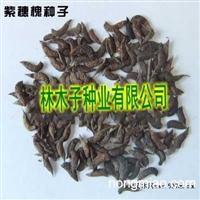 紫穗槐种子价格