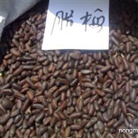 腊梅种子价格