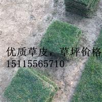 百色马尼拉草皮(价格)