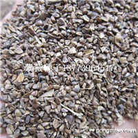 沭阳专业批发紫薇种子提供紫薇种子育苗技术