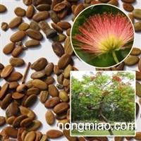 绒花树种子红花合欢种子绒树林木观花苗木种子大量批发