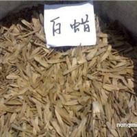 供应 白蜡种子 最新价格 速生白蜡种子哪里有 白蜡种子