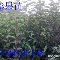 123果树苗