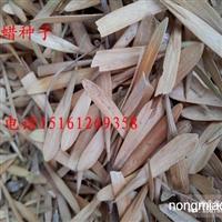 白蜡种子大量供应 低价售出 沭阳苏新花园 欢迎您前来选购!