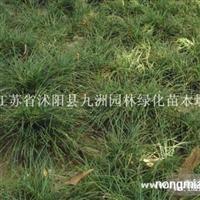 供应沿阶草,质量好,价格低,量大优惠。