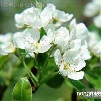 水生植物姜花,姜花小苗,姜花直销基地,又名野姜花