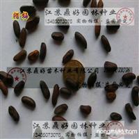 腊梅种子、林木种子批发