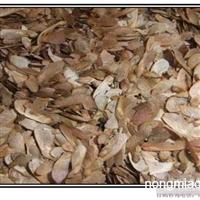 美国红枫种子 美国红枫种子价格
