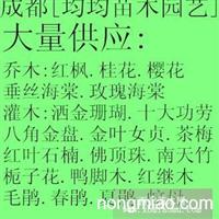 四川成都温江绣球花.海桐.黄秧