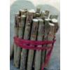 供应毛白杨一条鞭――山东育林苗木基地