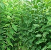 供应各种优质精品林