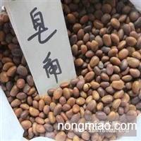供应新采皂角种子 皂角种子价格