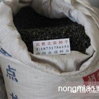 供应栾树种子武强县(故城县)出售库存30吨栾树种子武邑县