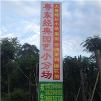 大量粉花山扁豆、花棋木、泰国樱花、木芙蓉、胭脂木