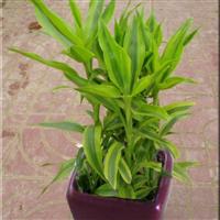 室内花木出租植物出租去甲醛植物出租租摆