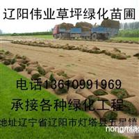 丹东绿化草坪