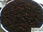 供应辛夷种子、栾树种子、流苏种子、木瓜种子、五角枫种子等