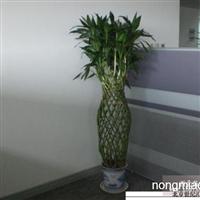 北京海淀区绿植租赁公司