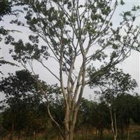2014年下半年苗圃可供苗木