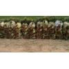 油松营养袋苗高度70cm