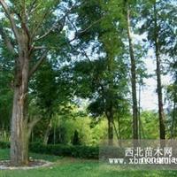 4年连旱影响云南野生动植物生存 苏铁、红豆杉、珙桐等植物死亡