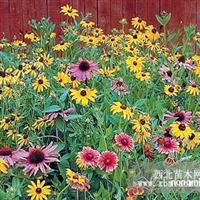 黑龙江宿根花卉种子,野花种子,野花组合批发
