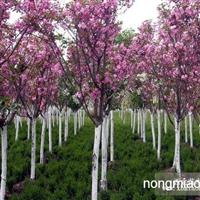 樱花 供应商的评估与选择优质特价