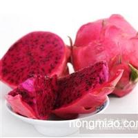 台湾风情园生态农庄供有机红心火龙果苗