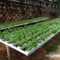 东莞兰天兴农蔬菜 瓜菜无土栽培谁被技术 营养液