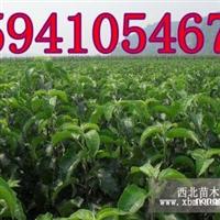123果树苗价格